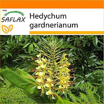 Saflax - jardin dans le sac - 10 graines - Red Ginger Lily - Longose - Giglio dello zenzero - Jengibre amarillo - Riesen - Schmetterlingsblume