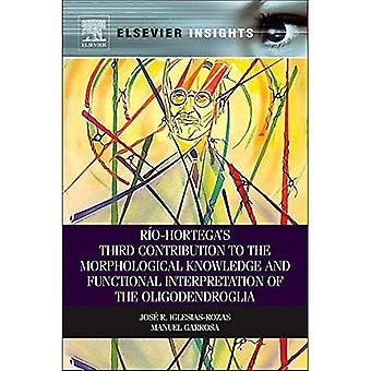 Rio-Hortega S Third Contribution to the Morphological Knowledge and Functional Interpretation of the Oligodendroglia