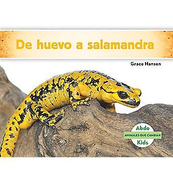 de Huevo a Salamandra (Becoming a Salamander ) by Grace Hansen - 9781