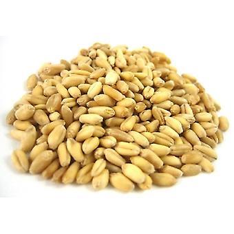 Organic Soft Wheat Kernels -( 22lb )