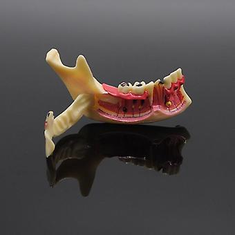 Dentistry Teaching Training Model, Dental Communication Model, Mandibular Model
