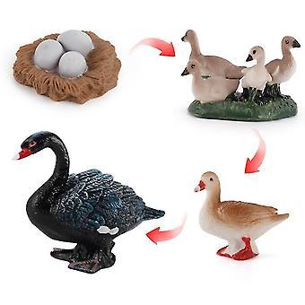 2kpl musta joutsen 4kpl kanaa, ankkaa ja hanhen kasvusykliä tieteellinen tutkimus asettaa minikokoinen siipikarja eläinmalli lasten lelu az16282