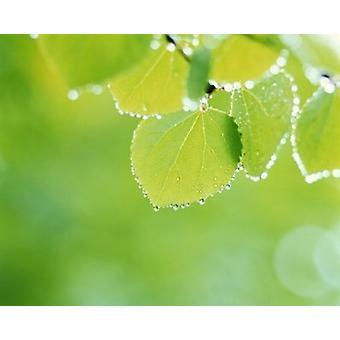 Selektivt fokus som närbild av gröna löv hängande från träd affisch Skriv av panoramabilder (24 x 20)