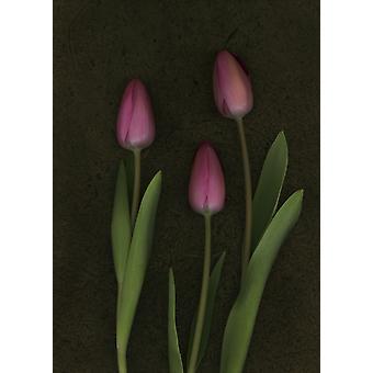 Pink Tulips PosterPrint