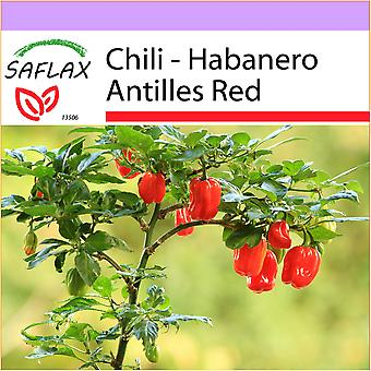 Saflax - 10 seeds - Chili - Habanero Antilles Red - Piment habanero - Peperoncino Habanero rosso delle Antille - Chile habanero red antilles - Chili - Habanero Antilles Red