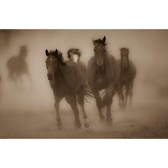 ゲイリー クランドールでセピア色の馬 II ポスター印刷