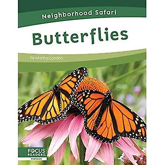 Neighborhood Safari: Butterflies