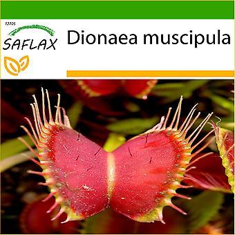 Saflax - 10 Samen - mit Boden - Venus Fly Trap - Dionée Attrape-Mouche - Venere Acchiappamosche - Venus Atrapamoscas - Venus - Fliegenfalle