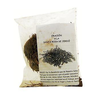 Anastatica Plant 100 g