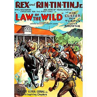 Lag av vilda [DVD] USA import
