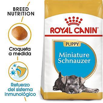 Royal Canin Miniature Schnauzer Puppy Pienso para Cachorro de Raza
