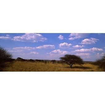 Вид ландшафта засушливой саванны в сухой сезон Центральной Калахари игра заповедника Ботсвана Плакат Печать