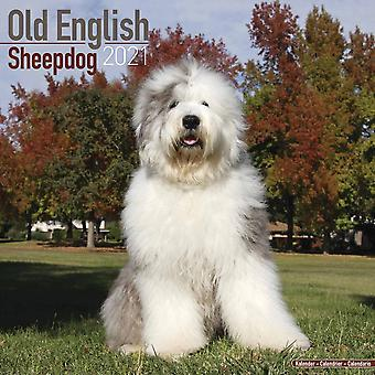 Otter House Square Wall Calendar 2021 - Old English Sheepdog