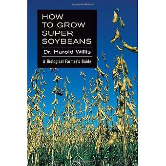 Come coltivare soia Super