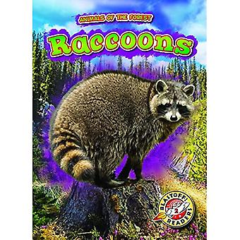 Raccoons (Animals of the Forest)
