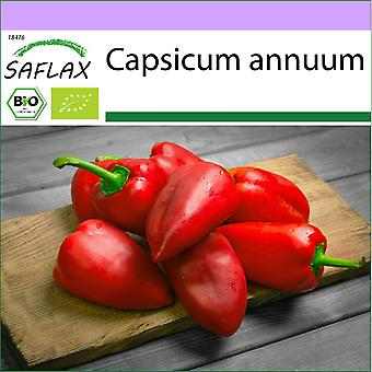 Saflax - 15 zaden - Biologisch - Hete Chili Peper - Barak - BIO - Piment - Barak - BIO - Peperoncino - Barak - Ecológico - Chili - Barak - BIO - Chili - Barak