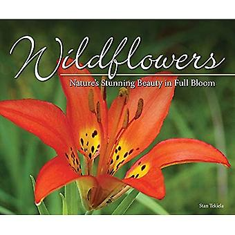 Wildflowers: Nature's Stunning Beauty on Display (Nature Appreciation)