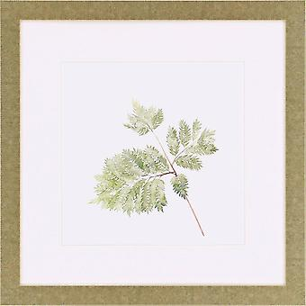 Watercolor leaf study ii traditional style by paragon