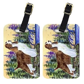 Carolines Treasures  SS8105BT Pair of 2 Springer Spaniel Luggage Tags