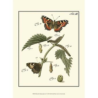 Butterfly Metamorphosis I Poster Print by Vision studio (10 x 13)
