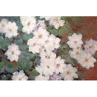 Clematis, Claude Monet, 60x40cm
