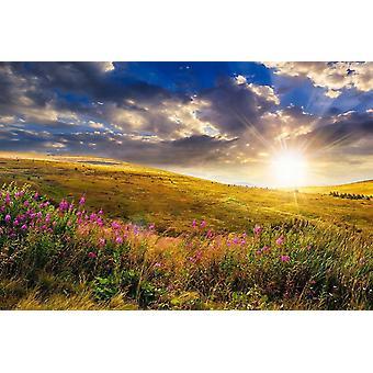 Tapet väggmålning vilda blommor Mountain Sunset