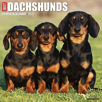 Just Dachshunds 2022 Wall Calendar Dog Breed by Willow Creek Press