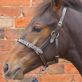 Hy Leather Foal Head Collar