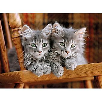Clementoni Kittens Hochwertiges Puzzle (500 Teile)