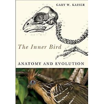L'oiseau intérieure: Anatomie et évolution