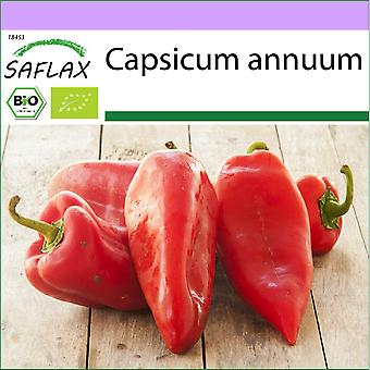 Saflax - 20 seeds - Organic - Sweet Pepper - Long Red Marconi - BIO - Poivron - Red Marconi - BIO - Peperone - Long Red Marconi - Ecológico - Pimiento - Marconi Rojo Largo - BIO - Paprika - Long Red Marconi