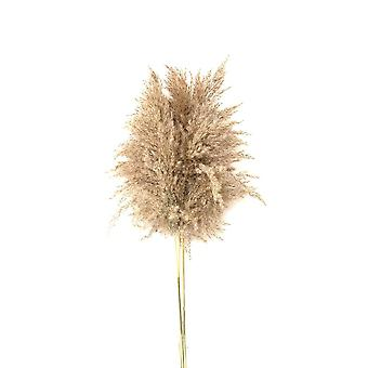 Wedding Flowers Bunch, Natural Dried Pampas Grass, Home Decoration