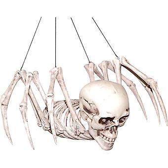 هيكل عظمى العنكبوت