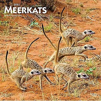 Meerkats 2021 Square Btuk Calendar by Browntrout