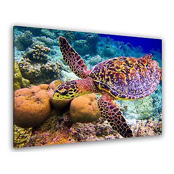 Fototafel Schildkröte und Meeresboden - 80x50 cm