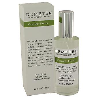 Demeter Cannabis Flower by Demeter Cologne Spray 4 oz / 120 ml (Naiset)