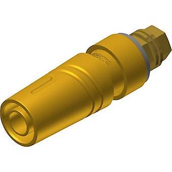 SKS Hirschmann KTT 2600 G M4 Au turvallisuus pistorasiaan pistorasia, pystysuora pystysuora sokan halkaisija: 4 mm keltainen 1 PCs()