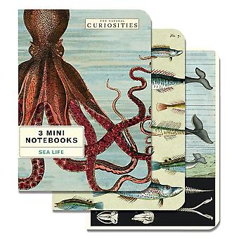 Cavallini Curiosities Whale Fish Journal Diary Notebooks x 3