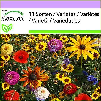 ספלקס-1000 זרעים-מערבבים את ה' ילדים בקלות-שעשועים והגינות-מיקס לבידור-אלגיניה