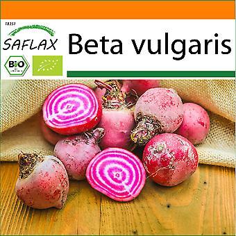 Saflax - Jardim no Saco - 70 sementes - Orgânico - Beetroot - Chioggia - BIO - Betterave - De Chioggia - BIO - Barbabietola - Chioggia - Ecológico - Remolacha - Chioggia - BIO - Rote Beete - Chioggia