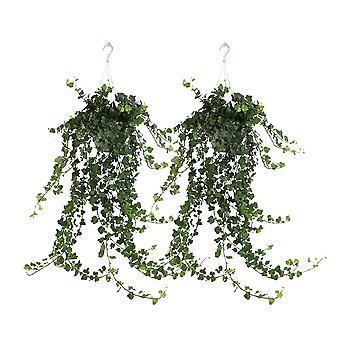 Hedera helix - klimop - hangplant - set 2 stuks - Hoogte 60 cm - Diameter pot 17 cm