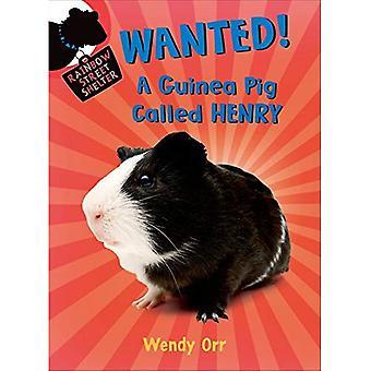 Gesucht!: ein Meerschweinchen namens Henry (Regenbogenstraße Shelter (Qualität))