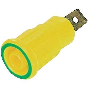 Stäubli SEB4-F6,3 Stik til sikkerhedsstik, indbygget grøn, gul 1 stk.