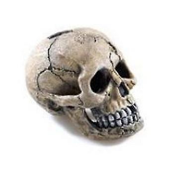 Klasyczny upiorny czaszka Ornament