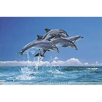 Poster - Four Dolphins - 24