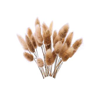 120PCS Natural Dry Flowers Decoration Rabbit Tail Type Grass Light Brown
