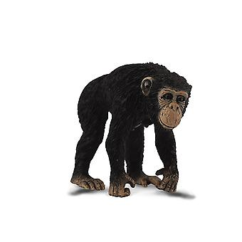 Collecta chimpansee vrouw