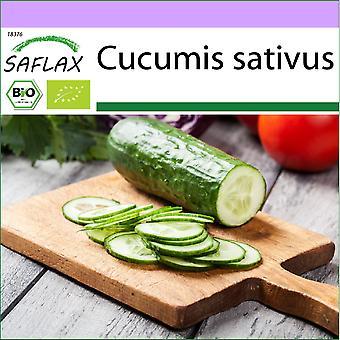 Saflax - 20 zaden - Biologisch - Komkommer - Marketmore - BIO - Concombre - Marketmore - BIO - Cetriolo - Marketmore - Ecológico - Pepino - Marketmore - BIO - Gurke - Marketmore