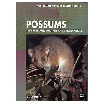 Possums: Brushtails, Ringtails, en de Reuzenkoeskoes