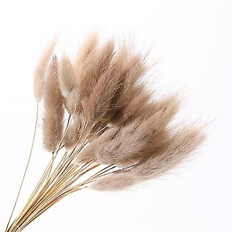 30pcs Natural Dried Flowers - Rabbit Tail Grass Bunch For Home Decor
